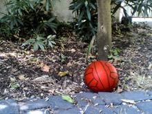 La palla in giardino